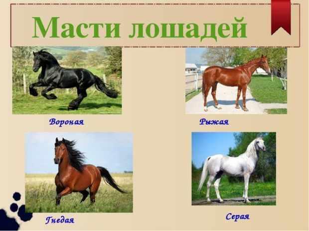 Четыре основные масти лошадей