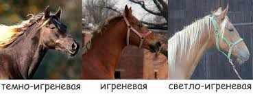 Игреневые лошади - оттенки масти