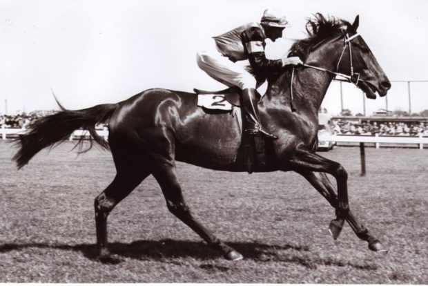 Конь Сухарь с наездником