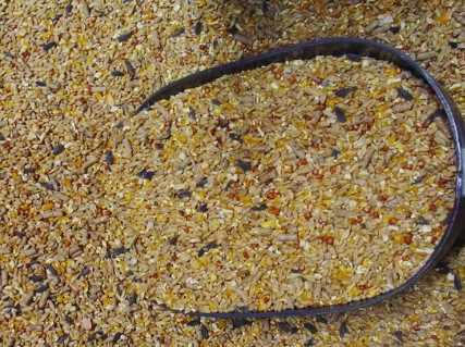 Зерновая смесь собственного приготовления для бройлеров