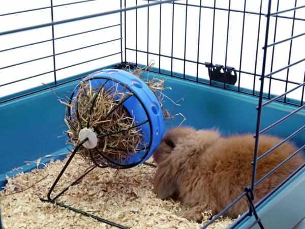 Сенник для свинок и кроликов