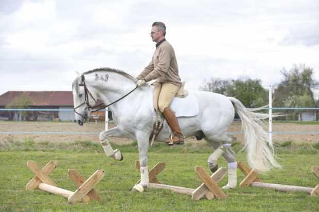 Работа на кавалетти с конем