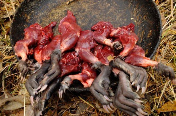 Жареный лапки ондатры - настоящий деликатес