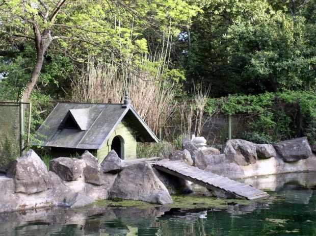 Домик для лебедя в парке у водоема