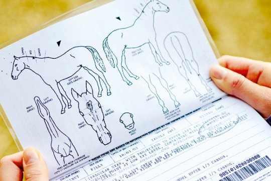 Международный паспорт коня позволяет перевозить лошадь за пределы РФ