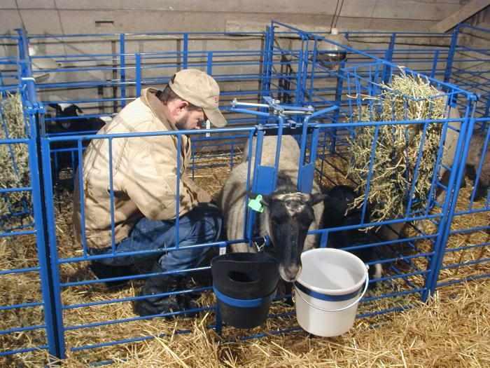 Уход за козой перед окотом