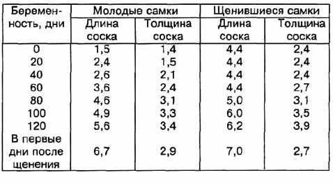 Определение срока беременности по соскам