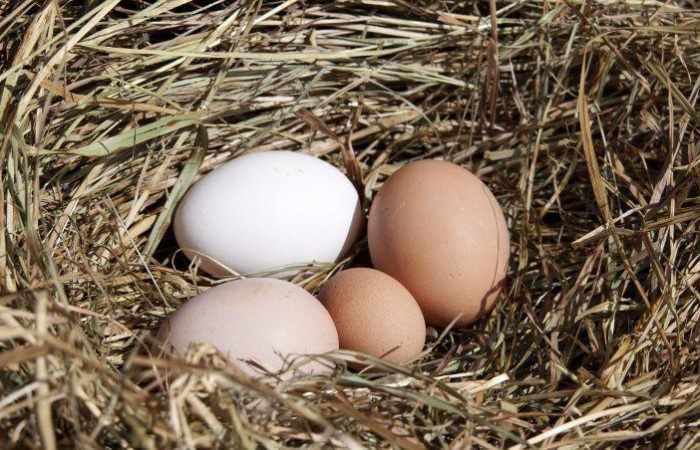 Яйца породы Геркулес