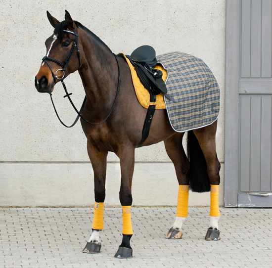 Амуниция для выездки лошадей