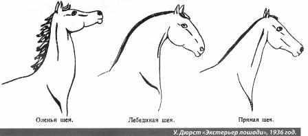 Типы шеи лошадей