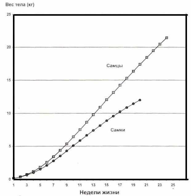 Таблица веса индейки