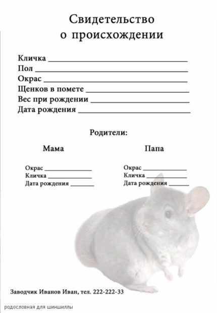 В паспорт шиншиллы записывается кличка