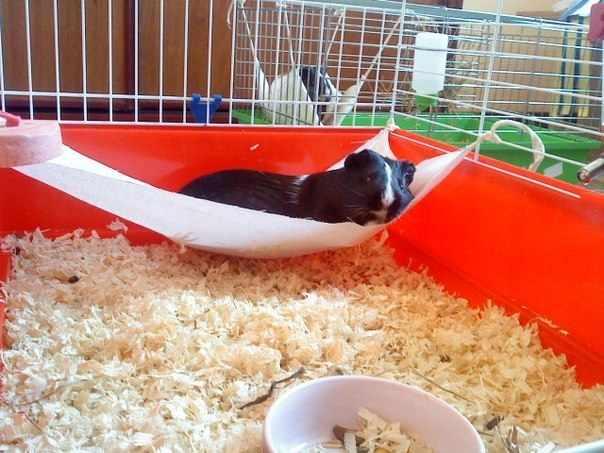 Удобный гамак для морской свинки