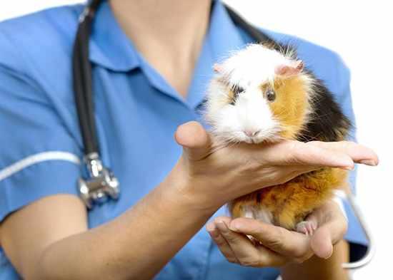 Лечение опухолей производится у ветеринара