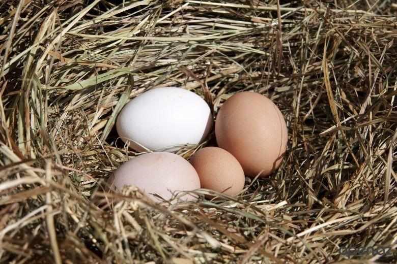 Яйца яичных пород больше