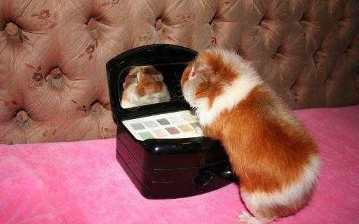 Свинка Тедди у зеркала