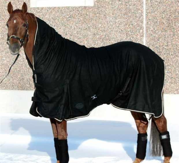 Попона для лошади на зиму