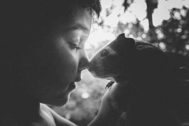Поцелуй свинки