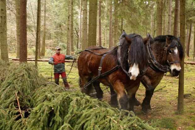 Рабочие лошади должны иметь 4 кормления