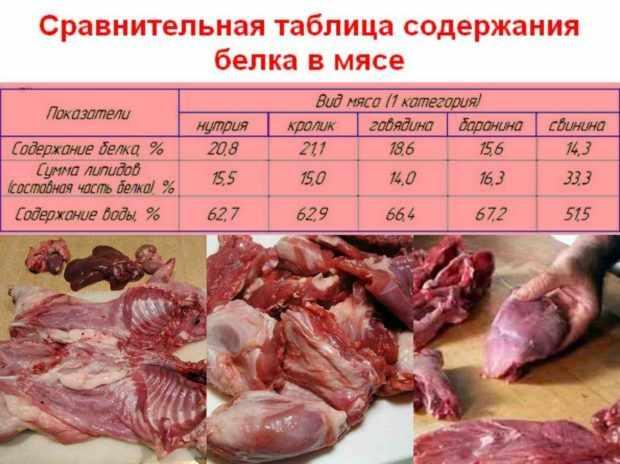 Сравнение мяса разных животных