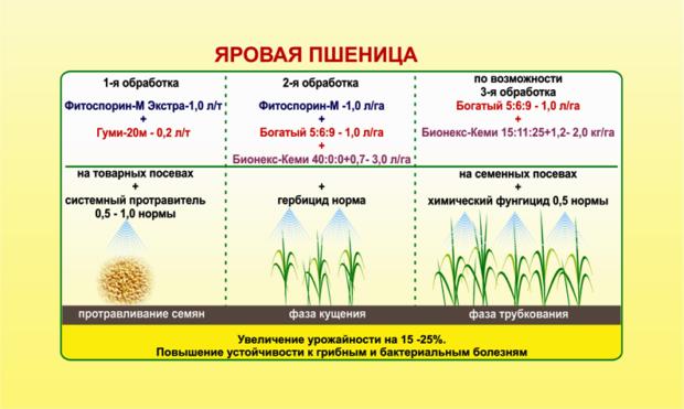 Развитие пшеницы