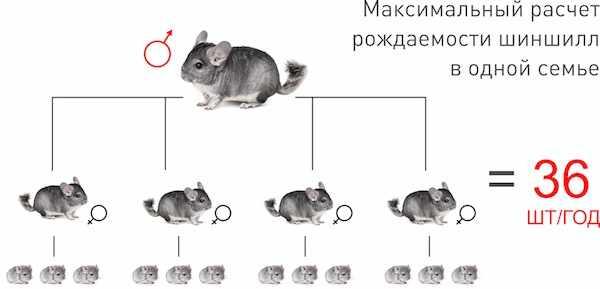 Количество приводимого потомства