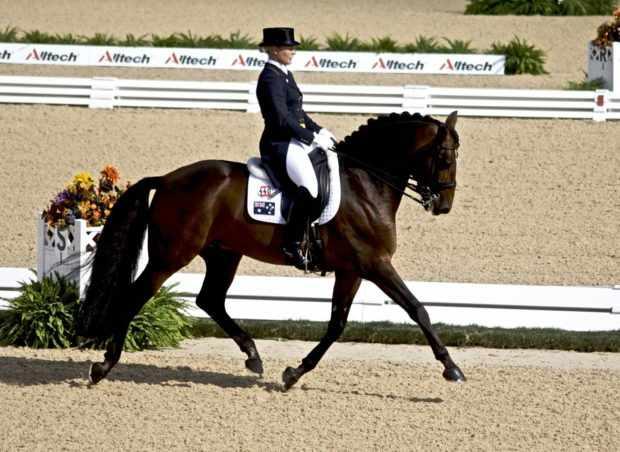 Выездка лошади - умение красиво двигаться
