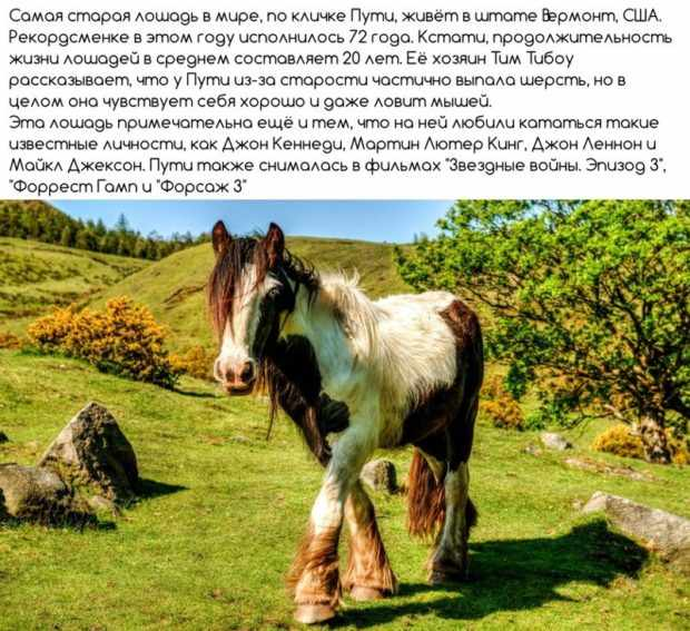 Лошадь рекордсмен по возрасту
