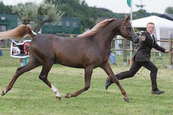 Рысь лошади - легкий бег