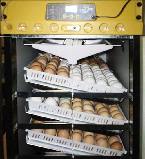 Лотки наклонные в инкубаторе