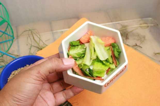 Свежие овощи для беременной морской свинки