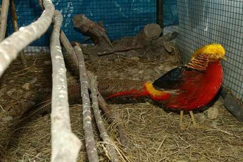 Пленка зимой защищает птиц от ветра