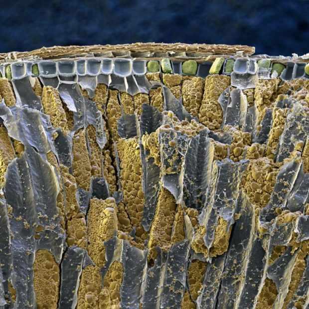 Зерно под микроскопом