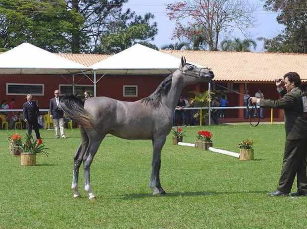 Выставка лошадей - оценка экстерьера