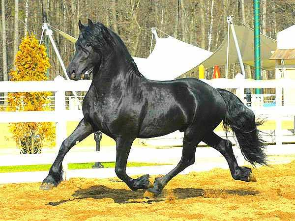 Вид бега лошади - аллюр