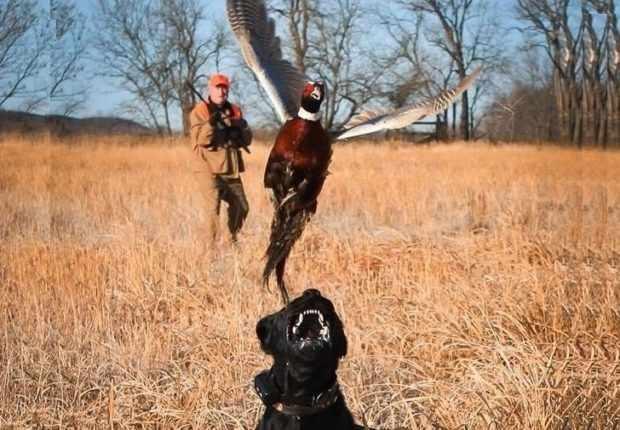 Охота с ружьем и собакой