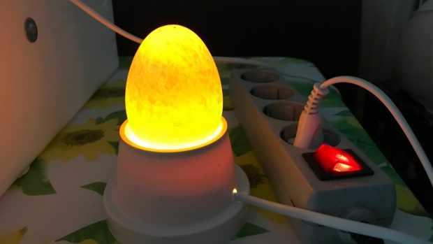 Качественное гусиное яйцо