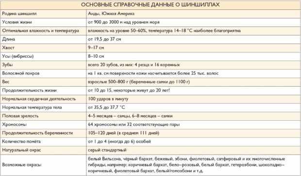 Общая информация о шиншиллах
