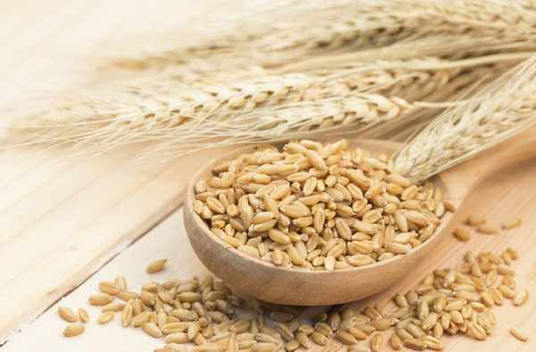 Цельное зерно пшеницы