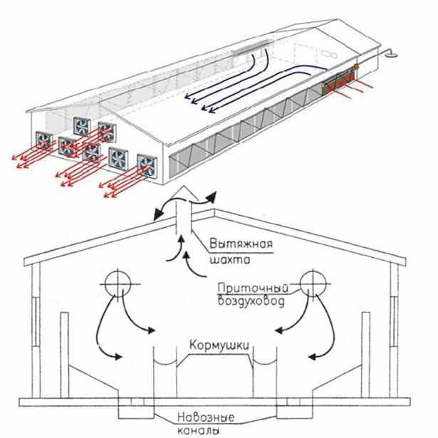 Схема вентиляции фермы