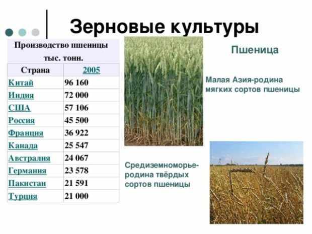 Производство пшеницы