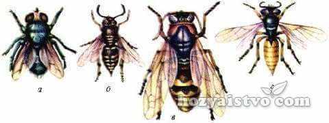 паразиты_пчел