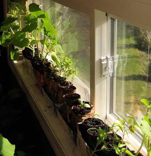 Растения на окне квартиры