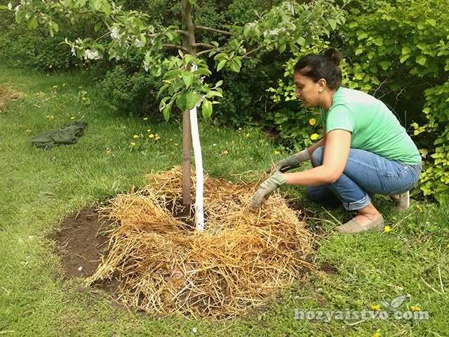 Мульча для садовых деревьев