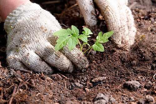 Методы посадки овощей