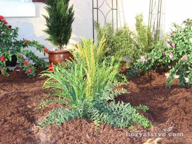 огородничество в условиях засухи