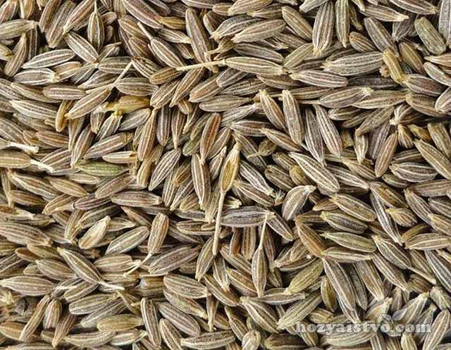 Семена тмина перед посадкой