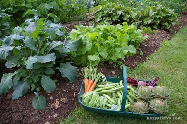 Продукты на огороде