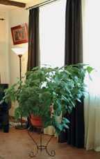 Растения субтропиков