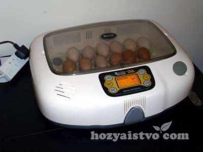 incubator white